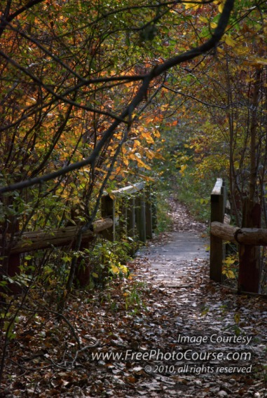 Beautiful picture of a leave-scattered hiking trail in the autumn.  © 2010, www.FreePhotoCourse.com, all rights reserved.