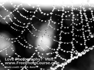 Spider Web and Water Droplets - Fine Art Photography Tips and Lessons - Visit www.FreePhotoCourse.com, all rights reserved