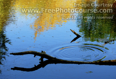 Picture of a Pond Reflection  -  © 2010, FreePhotoCourse.com  -  free digital pictures, computer desktop backgrounds, free online photography tips