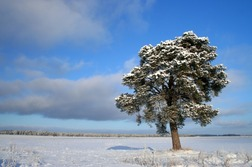 Stunning picture of a snow-covered field and tree; Picture of the Taj Mahal, India; visit www.FreePhotoCourse.com for free Photography Tips & Techniques.