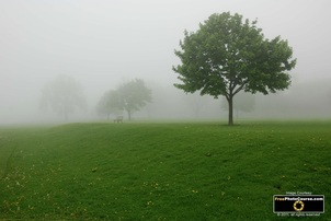 Beautiful wallpaper of a foggy pasture.  Picture links to a full page of Free Landscape Pictures and Wallpapers from FreePhotoCourse.com.