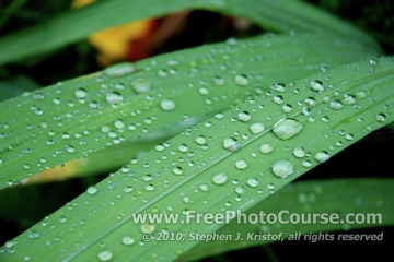 Water Droplets on a Leaf - Fine Art Photography Tips and Lessons - © 2010, Stephen J. Kristof, www.FreePhotoCourse.com, all rights reserved