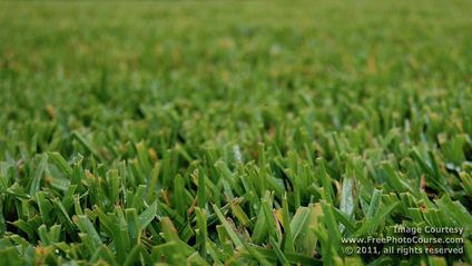 Close-up picture of bermuda grass with short depth of field background blur effect.  Get this and more great free pictures and wallpapers at www.FreePhotoCourse.com.© 2011, FreePhotoCourse.com; all rights reserved.