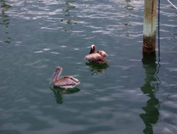 © 2010, FreePhotoCourse.com, all rights reserved.  Pelicans at a marina.  Example of photographic clutter.