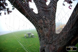 Amazing picture of a dew-covered spider web. Find more cool pictures and wallpapers at FreePhotoCourse.com. © 2011, all rights reserved.