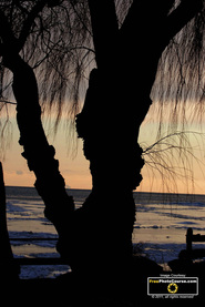 Picture of a silhouetted tree against a sunset at a frozen lake. Find more cool pictures and wallpapers at FreePhotoCourse.com. © 2011, all rights reserved.