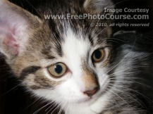 Picture of adorable kitten looking pensive; © 2010, all rights reserved.  Check out more Free Wallpapers and Pictures at: www.FreePhotoCourse.com