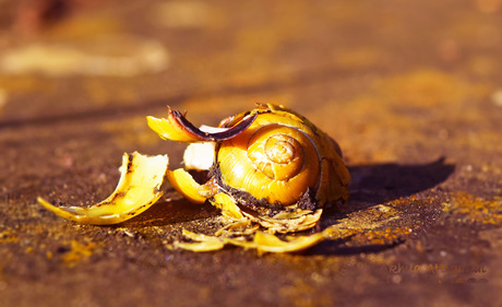 FreePhotoCourse.com Contributors' Gallery - Artistic Picture of a Broken Snail Shell bathed in warm amber light
