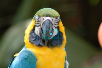 © 2010, FreePhotoCourse.com, all rights reserved.  Depiction: auto-focus icon or indicator as seen through camera viewfinder