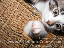 Picture of a cute kitten in a woven basket; © 2010, all rights reserved.  Check out more Free Wallpapers and Pictures at: www.FreePhotoCourse.com
